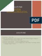 ANATOMI MUSKULOSKELETAL