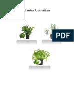 plantas aromnaticas