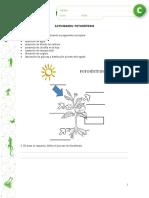Fotosintesis 2 Ciclo Superior