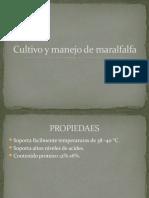 Cultivo y manejo de maralfalfa.pptx