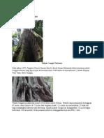 Hutan Simpan Pasir Raja.docx