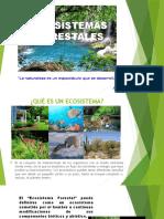 Ecosistema Forestal