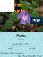 As_plantas.pps