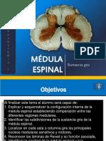 06b Médula Espinal Sustancia Gris