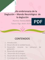 236637646-Desarrollo-Embrionario-de-La-Deglucion-Mando-Neurologico.ppt