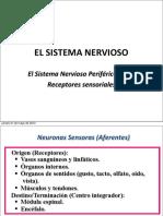 Clase 2 SN Periferico Receptores