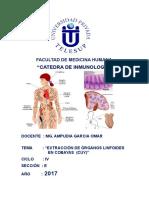 """informe inmuno EXTRACCIÓN DE ÓRGANOS LINFOIDES                          EN COBAYAS  (CUY)"""""""