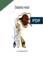Sistema renal.pdf