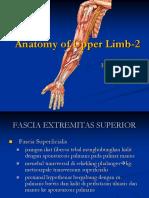 Anatomy of Upper Limb-2