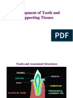 toothdevelopment08opt-111224041502-phpapp02.pdf