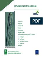 Nematodos fitoparasitos en cultivos hortícolas.pdf