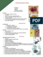 Resumo  parasitologia