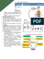 10.2) Dr. Enriquez - Amebiasis.pdf