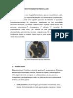Micotoxinas Por Penicillium