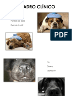 Distemper Canino Virologia