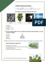 4º Básico Diagnostico.doc