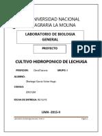 lechuga hidroponica