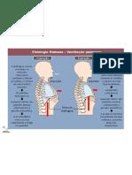 39270907 Resumo Fisiologia Respiratoria