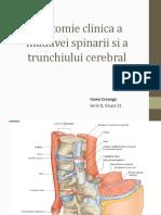 Anatomie-clinica-a-maduvei-spinarii-si-a-trunchiului.pptx