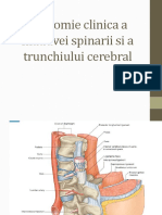 Anatomie Clinica a Maduvei Spinarii Si a Trunchiului