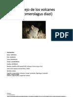 Conejo de Los Volcanes (Romerolagus Diazi)