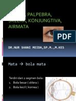 Orbita, Palp, Airmata