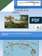 Evolucion-cetaceos2009