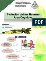 Evolución Del Desarrollo Cognitivo
