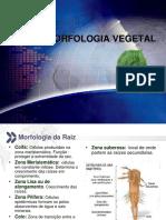 MorfologiaVegetal