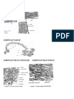 Gambar struktur hewan