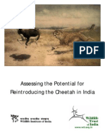 Cheeta Report 2010 - Naresh Kadyan