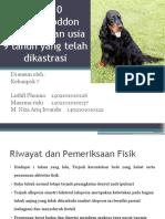 case 10.pptx