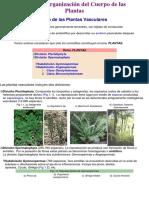 Estructura y Funcion Vegetal