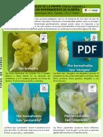 01b-formas-florares-de-la-papaya-1404812880.pdf