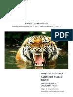 El Tigre de Bengala - Información y Características - Biología