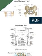 Anatomi Lower Limb.pptx