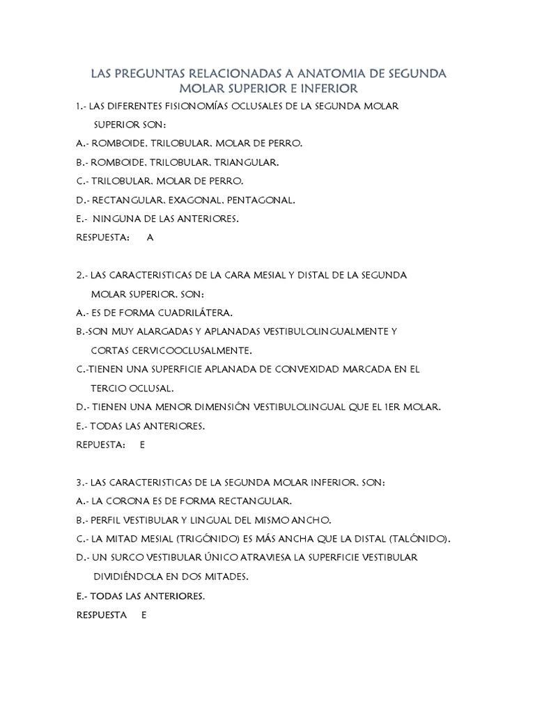 Moderno Marcado Superficie Anatomía Patrón - Imágenes de Anatomía ...
