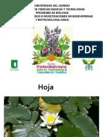Pilar-hoja.pdf