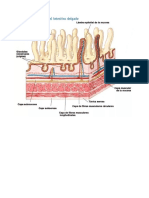 Organismo Humano Niveles 1,2,3,4 y 5