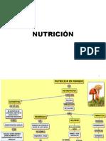 NUTRICIÓN FUNGICA