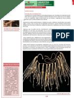 educacion inca.pdf