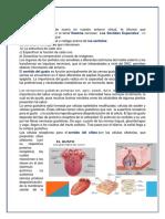 Tarea IV Anatomia y Fisiologia Humana