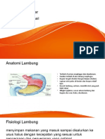 Carcinoma Gaster