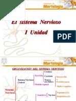 El Sistema Nervioso22 1 (1)