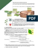 4. Guia Tejidos Vegetales 1