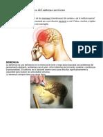 Tipos de Enfermedades Del Sistema Nervioso Con Imagen