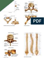 Libro de Osteologia y Fracturas