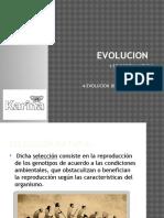 Evolucion Karina