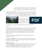Bosques coníferos