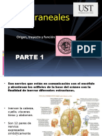 8- Pares Craneales (Parte 1)